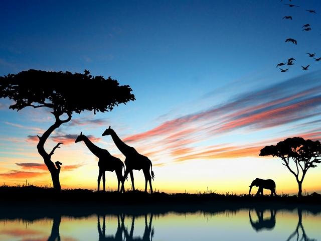 Африка к чему снится