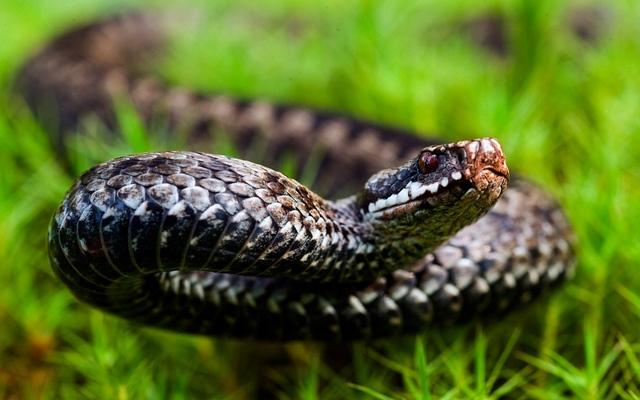 Змея к чему снится