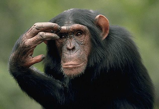 Сонник обезьяна к чему снится
