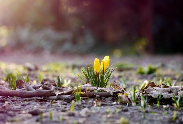 Весна к чему снится