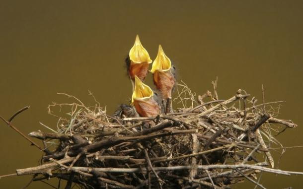 Сонник гнездо к чему снится