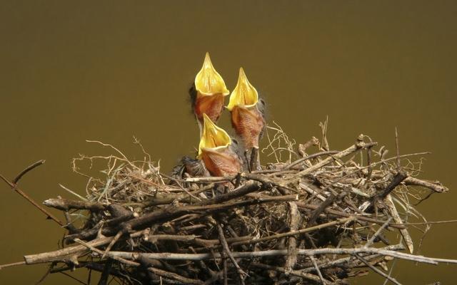 Гнездо к чему снится