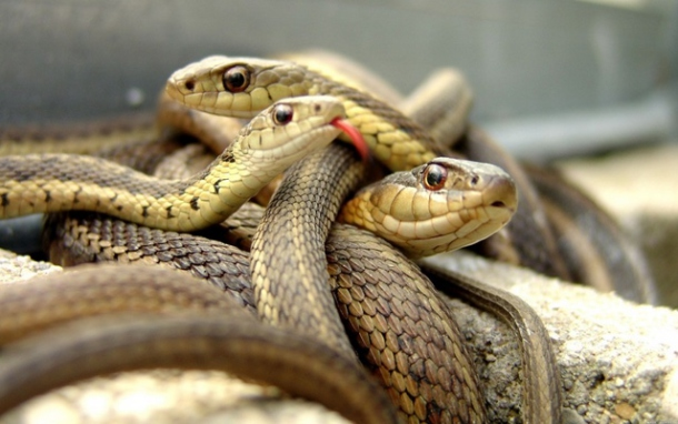 Сонник змеи к чему снятся