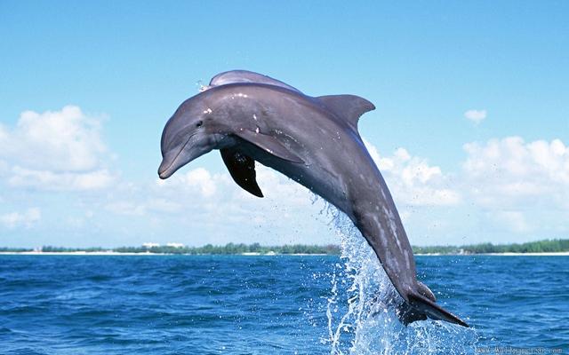 Дельфин к чему снится
